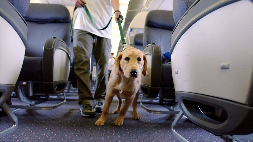 Emotional-support-animals-on-planes-under-threat.jpg